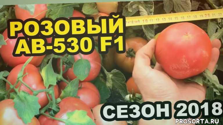 помидоры, юксел тохум, интро, вита, экстра, фитактив, стимулыторы роста, препараты