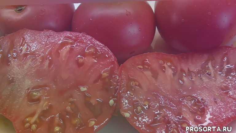 сахарный бизон, мясистый томат, сладкие томаты, самый вкусный, дегустировать томаты, дегустация, томаты, огородная азбука