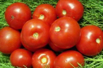Скороспелый томат 323