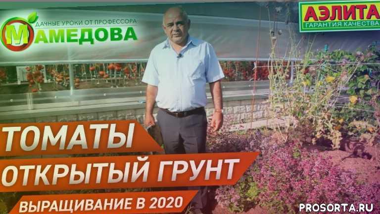 Томаты для открытого грунта. Выращивание в 2020 году