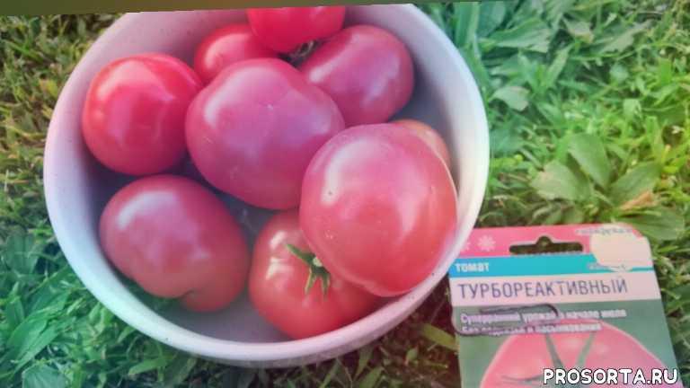 помидоры, сорта томатов, камалеева наталья, какие помидоры для открытого грунта, какие томаты посадить, первые помидоры, томаты