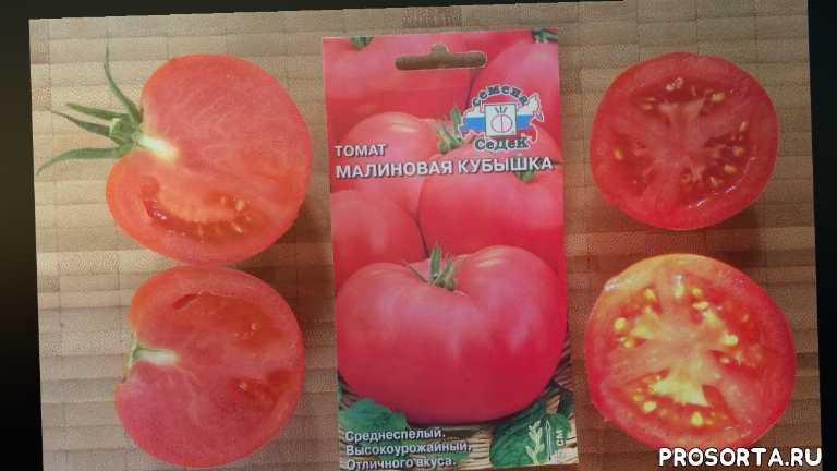 аэлита, вкусные томаты, томаты для консервирования, салатные томаты, розовые томаты, гавриш, партнер, седек