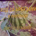ТОНКОСТИ ВЫРАЩИВАНИЯ АРБУЗОВ В ТЕПЛИЦЕ! КОРОТКО О ГЛАВНОМ! Выращивание арбузов в теплице.
