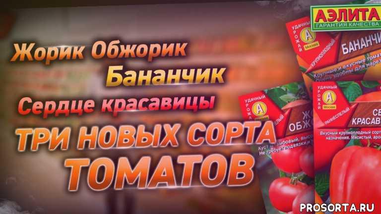 томаты 2019, томат бычье сердце красное, томат сердце красавицы форум, томат сердце красавицы, томат бананчик, томат бананчик отзывы, томат бананчик аэлита отзывы, жорик обжорик томат