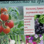 Удачное соседство на грядках Совместимость овощей на огороде