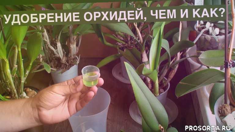 орхидеи удобение, удобрение орхидей, удобрение орхидеи, орхидея уход, орхидея дендробиум, дендробиум нобиле уход, orchids, дендробиум уход в домашних условиях