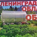 В ГОСТЯХ у меня на ОГОРОДЕ  23 июня Ленинградская область