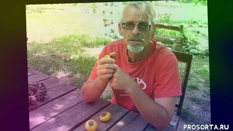 болезни томатов, вершинная гниль, томаты