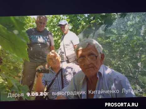 #виноград #дарья #крайнов #китайченко