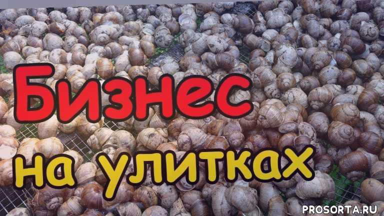 уход и разведение улиток, на ферме улиток, как выращивать виноградных улиток, как выращивать улиток, как разводить улиток, уход за улитками, выращивание улиток, ферма улиток