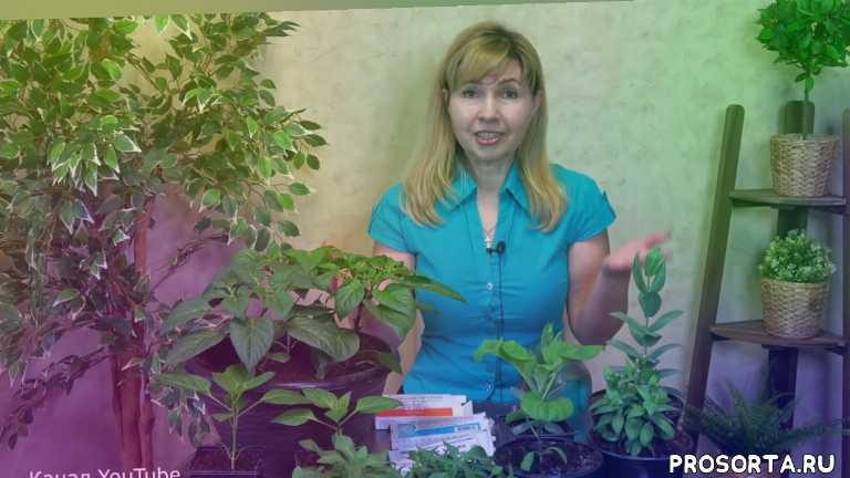 урожайный огород, чем подкормить рассаду, подкормка, витамины, удобрение, цветы, рассада, помидоры