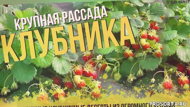 агро-маркет, agro-market, агромаркет отзывы, грядки своими руками, агромаркет, сад огород, выращивание, альбион