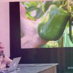 Выращивание баклажанов и перцев