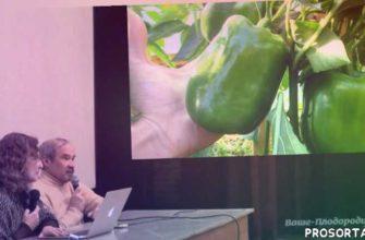 баклажаны, перцы, ваше плодородие, органическое земледелие, природное земледелие