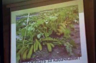 формировка огурцов, удобрения, сидераты, арбузы, тыквы, дыни, кабачки, огурцы