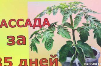 когда сеять на рассаду, vogorode.pro, в огороде про, что такое оэдема, оэдема на рассаде, лампы для рассады, подсветка для рассады, рассада помидоров