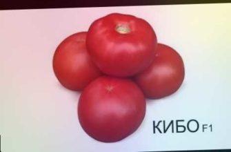 ks 888 f1, огурец ks 90 f1, дружное плодоношение, томат ks 21, томат с носиком, устойчивость к неблагоприятным условиям, отличная завязываемость плодов, идеальный розовый томат