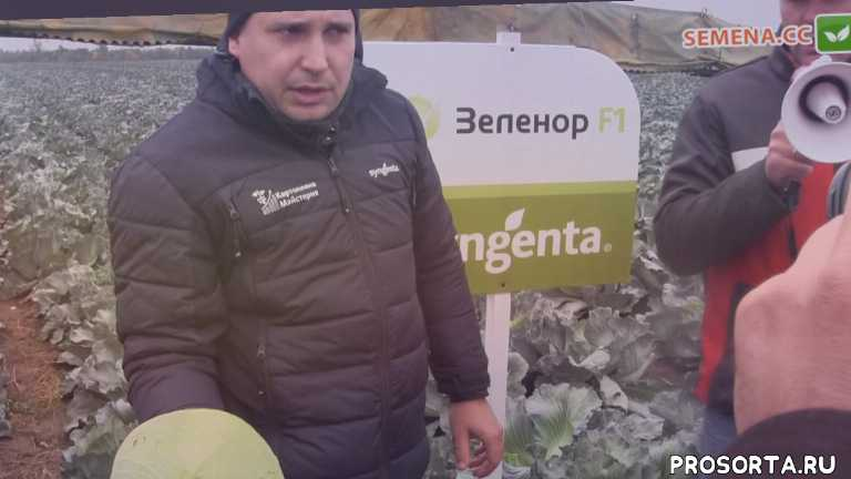 семена овощей купить в украине, обзор культуры, культура, обзор семена, обзор семян, насіння, семена, купить семена