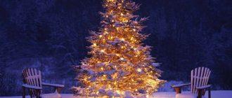 Какое хвойное дерево выбрать для Нового года с последующим заселением в сад